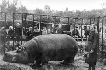 Ленинградский зоопарк рассказывает, как животные пережили блокаду