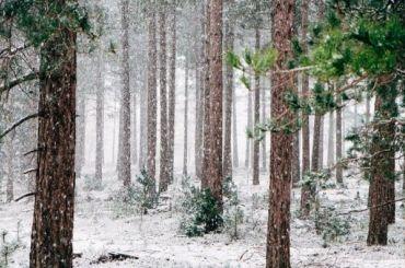 Петербуржцев ожидает самый теплый день вянваре
