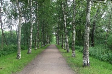 Эсеры предложили на250 гаувеличить площадь зеленых зон Петербурга