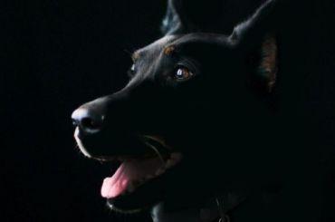 Четыре взрослых собаки и 17 щенков погибли при пожаре в Сестрорецке