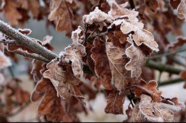 Петербуржцев предупредили оначале оттепели иплюсовой температуре