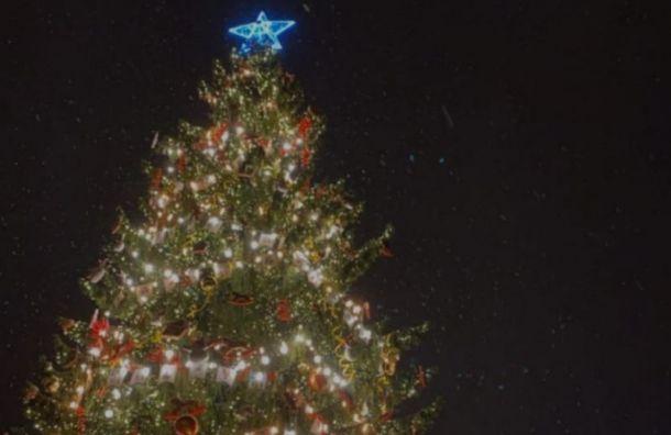 Руфер залез ночью на25-метровую елку наДворцовой площади