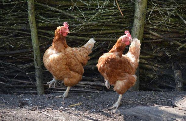 ВРоссии улюдей впервые вистории нашли птичий грипп