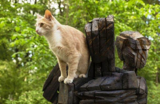 Вкотокультурной столице перепишут культурных котов