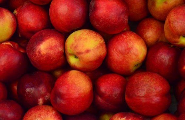 Почти 20 тонн свежих яблок изМакедонии непустили вПетербург