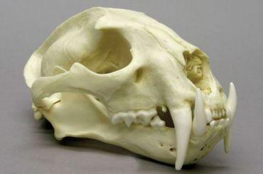 Неизвестные украли 50 редких черепов на3,5 млн рублей