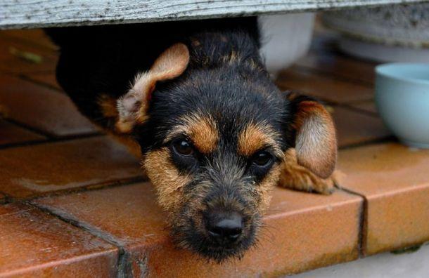 ВПетербурге построят приюты для 200 собак и100 кошек