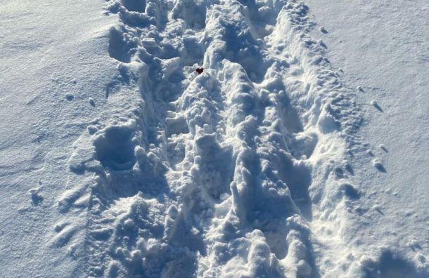 Заметает: только задва дня вПетербурге выпало 25см снега