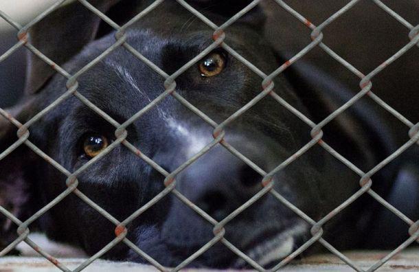 Собак, чьи хозяева болели коронавирусом, отправляли вприюты