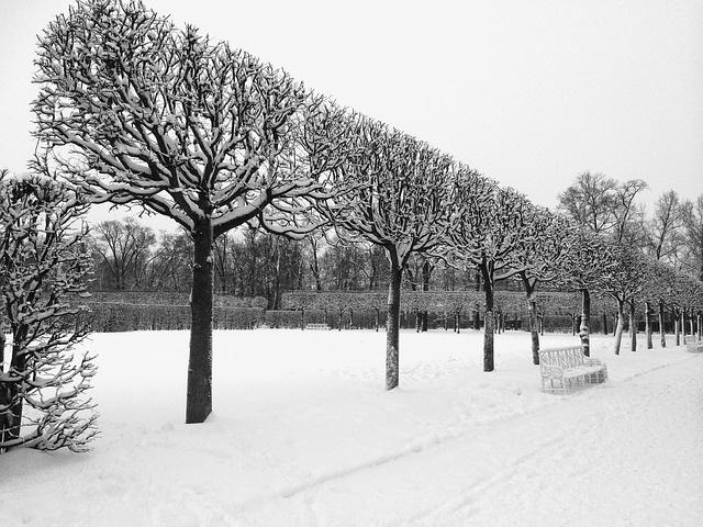 winter-1011559_640.jpg