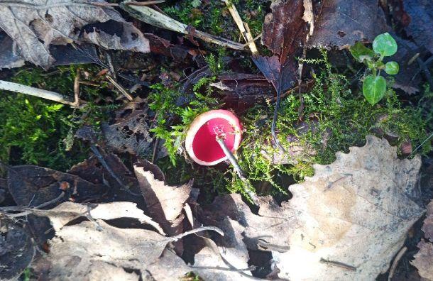 «Сезон открыт»: вЛенобласти заметили первые грибы