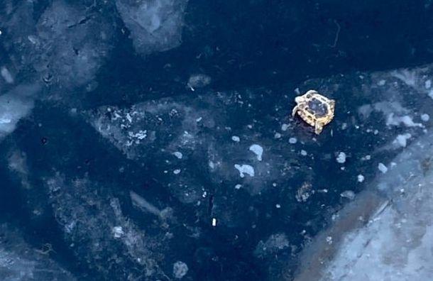 Петербуржцы спасли черепаху, которую выкинули налед Большой Невки