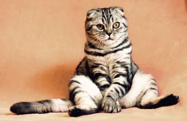 Суд отказал хозяйке погибшего кота Василия вкомпенсации морального вреда