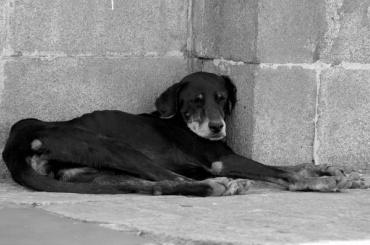 Светофор убил собаку током наГатчинском шоссе