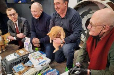 Пиотровский хочет провести встречу вClubHouse, посвященную котам