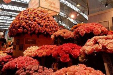 «Хорошо стоят цветы, подаренные сдушой»: чем порадовать женщин на8Марта