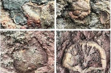 Надоме вПетербурге обнаружили окаменелости возрастом 450 млн лет