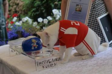 НаЕвро-2020 эрмитажный кот Ахилл вновь будет предсказывать результаты игр