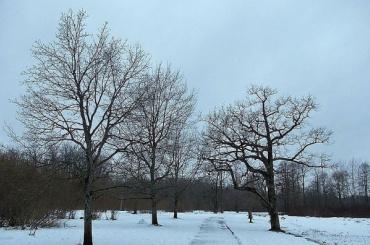 Суд запретил шведской фирме строить коттеджи натерритории Баболовского парка