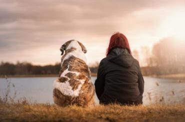 Госдума рассмотрит законопроект обобязательной регистрации домашних животных
