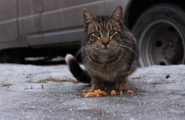 «Лучше коты, чем крысы»— чем занимается проект #БАБУШКАНАКОРМИТ ипочему важно заботиться обуличных животных