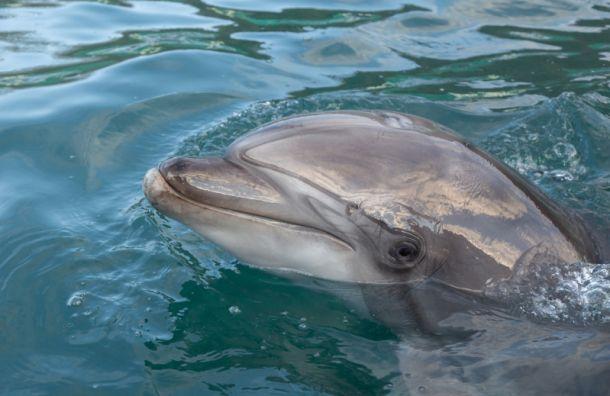 Дельфинарий планирует вернуться вПетербург вследующем году