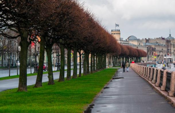 Петербуржцам предлагают выбрать цветочное оформление набережных иулиц