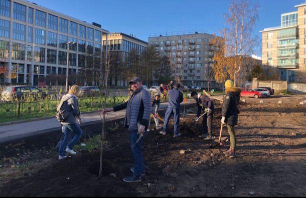 Активисты создали инструкцию попосадке деревьев вПетербурге