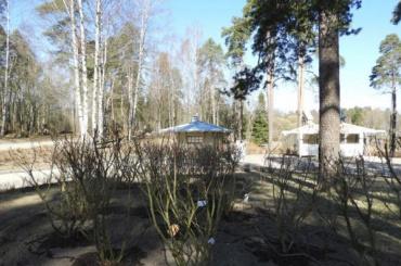 Впарке «Монрепо» высадят около 2,6 тысяч кустарников и120 деревьев