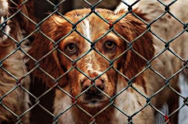 Беглов готов открыть вПетербурге два новых собачьих приюта