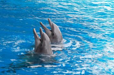 «Животных— наволю!»: жители дома наБутлерова против строительства дельфинария