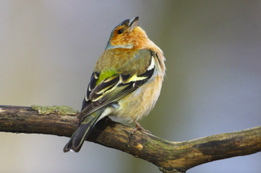 ВПетербург стали активно возвращаться перелетные птицы