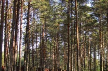 ЗакС утвердил список зеленых насаждений общего пользования