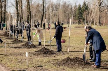 Как посадить дерево вПетербурге