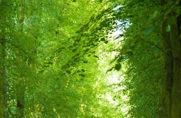 Осенью вЛенобласти появится Аллея блокадников