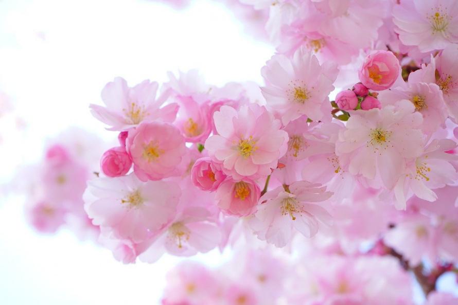 pink-324175_1280.jpg