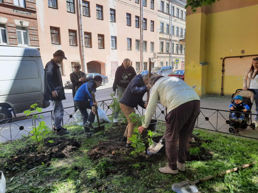 в скверике посадили кусты и цветы (1).jpg