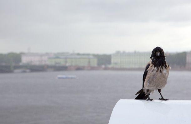 Карельский циклон сохранит вПетербурге прохладную идождливую погоду