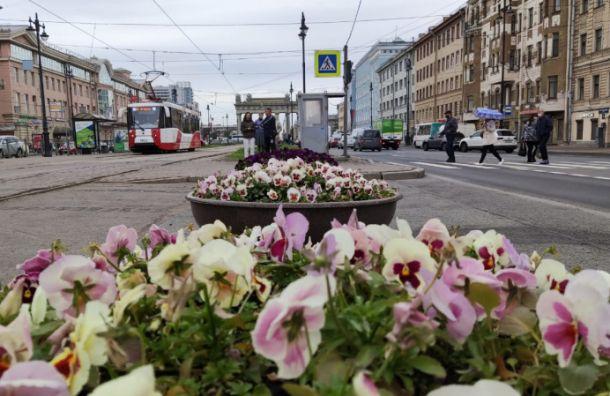 Более 200 тыс. цветов украсили Московский район
