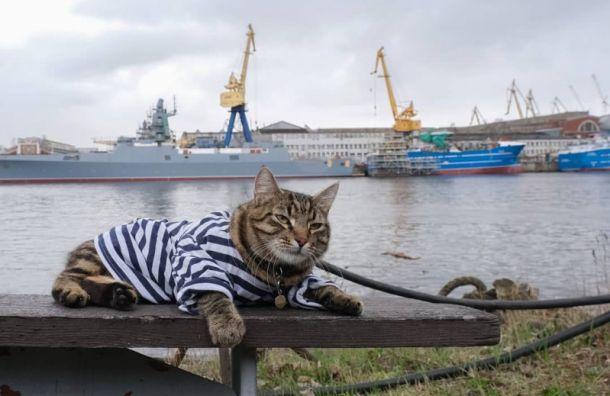 Петербуржцам предлагают посмотреть нахвостатых «сотрудников» театров изаводов
