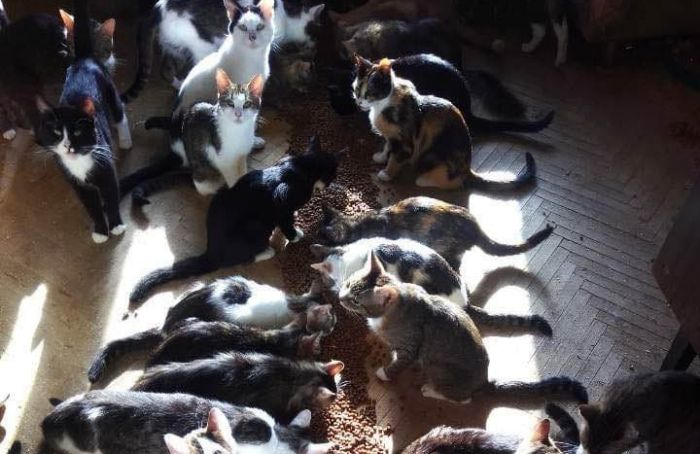 Петербуржец взял ксебе напередержку 30 кошек, аиххозяева исчезли