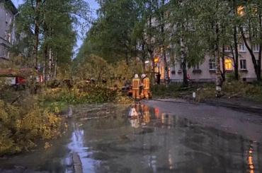 Дерево рухнуло намашину идетскую площадку вПриморском районе
