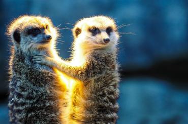 1июня вход вЛенинградский зоопарк для детей иподростков будет бесплатным