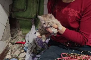ВПетербурге спасли котенка, провалившегося вузкую шахту под ванной