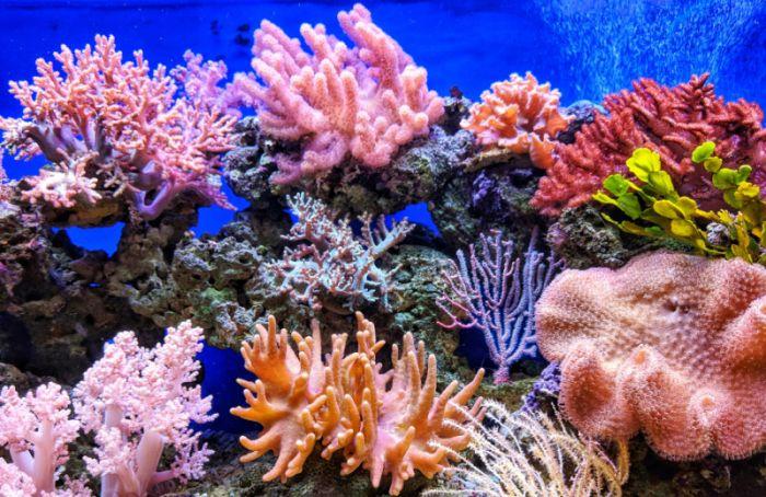 Почему напланете исчезают кораллы
