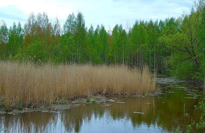 ВЮжно-Приморском парке замечено 94 вида птиц
