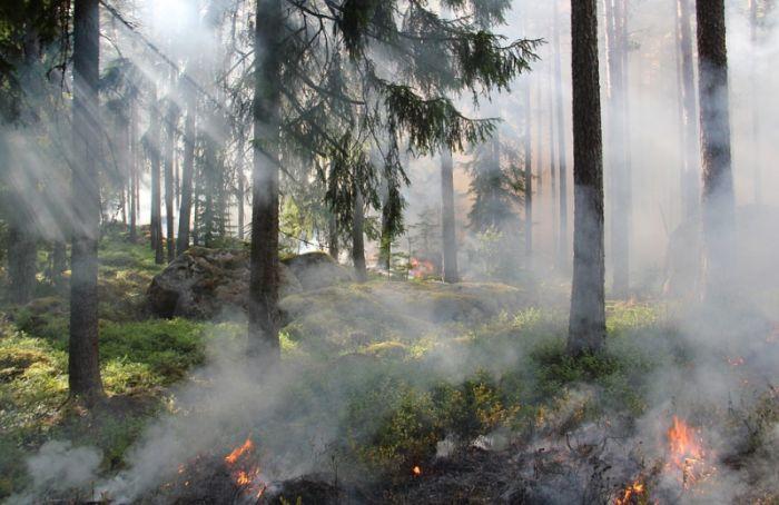 МЧС просит петербуржцев неходить влес из-за повышенной пожароопасности