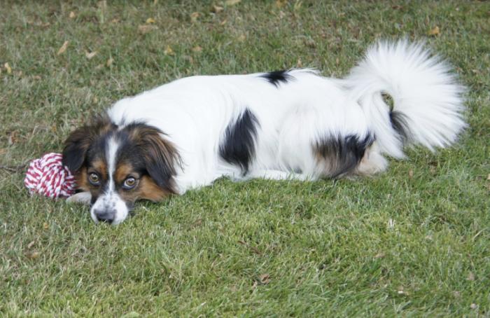 Петербуржца, сбросившего собаку сшестиметровой высоты, будут судить