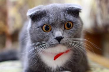 История о30 кошках, застрявших вквартире петербуржца, оказалась фейком