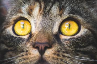 Семь из38 животных покинули «кошачье общежитие» вПетербурге